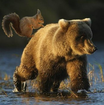 grizzly scoiattolo